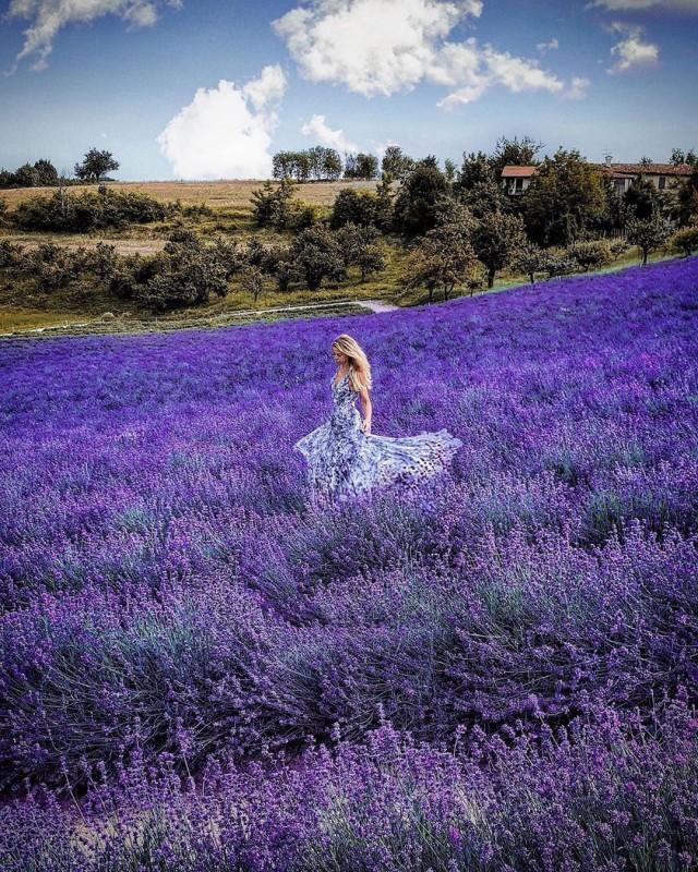 이태리북부 쿠네오 / campi di lavanda a Sale San Giovanni ( Cuneo) Itlay by ig_italia